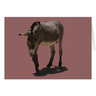 Paarden Western van de Steun van de sympathie Briefkaarten 0