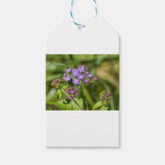 Paarse Ageratum Wildflowers Cadeaulabel