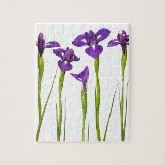 Paarse die irissen op een witte achtergrond worden puzzels