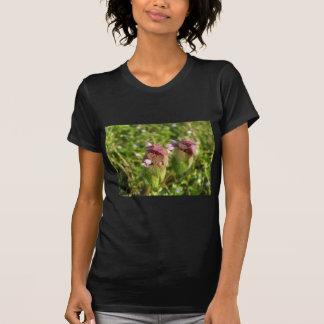 Paarse Dovenetel (purpureum Lamium) op groen T Shirt