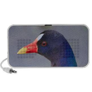 paarse gallinule laptop speakers