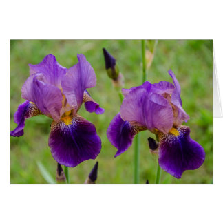 Paarse Iris - Bloemen - Moederdag - Verjaardag Kaart
