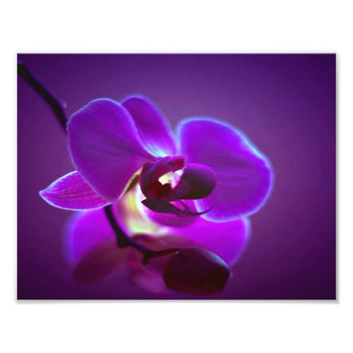 Paarse Orchidee Foto Afdruk