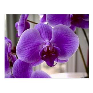 Paarse Orchideeën Briefkaart