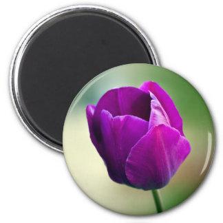 Paarse Tulp Magneet