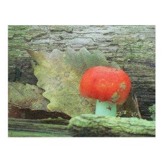 Paddestoel in het Bos Briefkaart