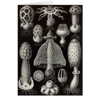 Paddestoelen Ernst Haeckel - Basimycetes Kaart