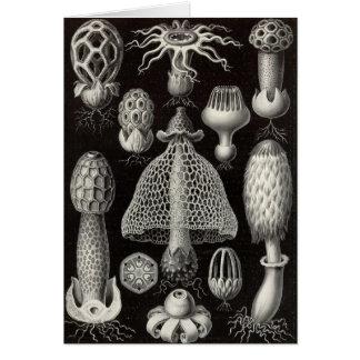 Paddestoelen Ernst Haeckel - Basimycetes Wenskaart