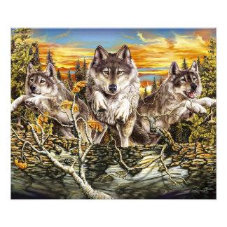 Pak van wolven het lopen foto