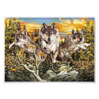 Pak van wolven het lopen foto afdruk