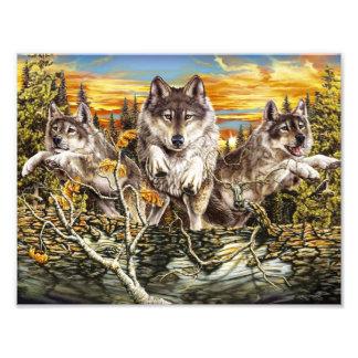Pak van wolven het lopen foto prints
