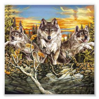 Pak van wolven het lopen fotoafdruk