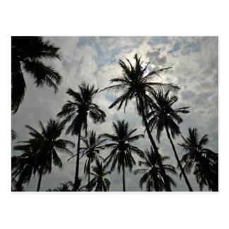 Palmen over Mexico Briefkaart