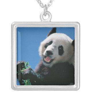 Panda die bamboe, Wolong, Sichuan, China eten Zilver Vergulden Ketting