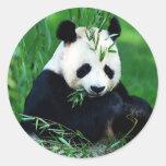 Panda die Bladeren eten Ronde Stickers