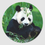 Panda die Bladeren eten Sticker