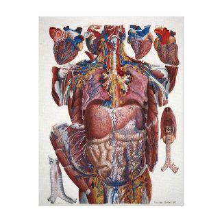 Paolo Mascagni Illustration van Menselijke Canvas Print