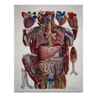 Paolo Mascagni Illustration van Menselijke Poster