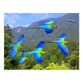 papegaai briefkaart
