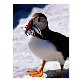 Papegaaiduiker Briefkaart