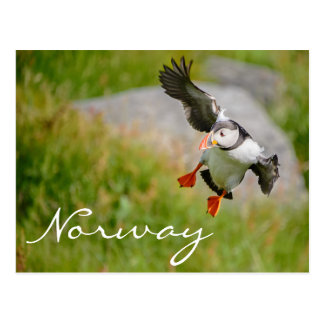 Papegaaiduiker die in het briefkaart van Noorwegen