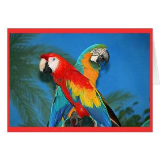Papegaaien Briefkaarten 0