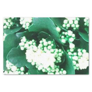 papier mousseline groen 25,4 x 38,1 cm zijdepapier