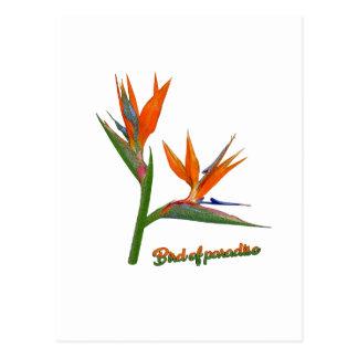 Paradijsvogel Briefkaart