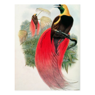 Paradijsvogel, Door T. Walter wordt gegraveerd die Briefkaart