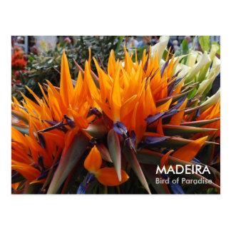 Paradijsvogel, MADERA Briefkaart