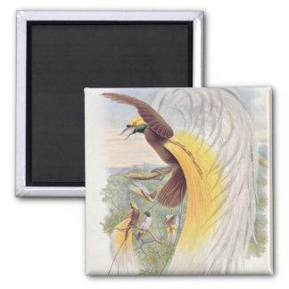 Paradijsvogel, Van 'Vogels van New Guinea Magneet