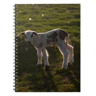 Pasgeboren lam notitieboek
