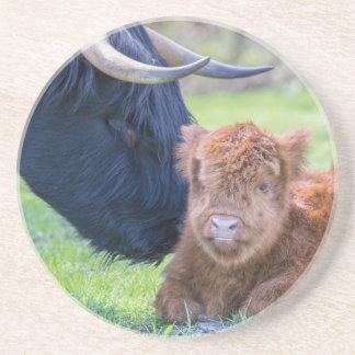 Pasgeboren Schots Hooglanderkalf met moederkoe Zandsteen Onderzetter