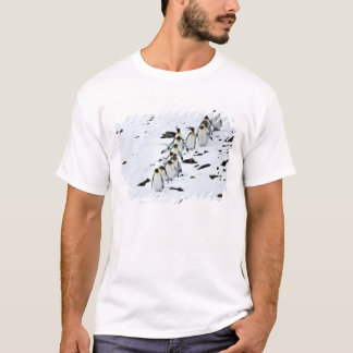 Patagonicus) groep van de Pinguïn van de koning T Shirt