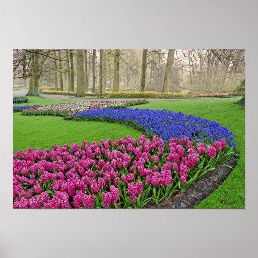 Patroon van de Hyacint, de tulpen, en 2 van de Dru Print