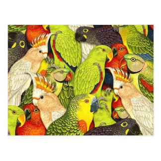 Patroon van de Vogels van de Papegaaien van de Briefkaart