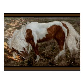 PC van het Pony van Chincoteague Briefkaart