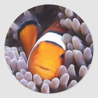 Percula Clownfish Ronde Sticker