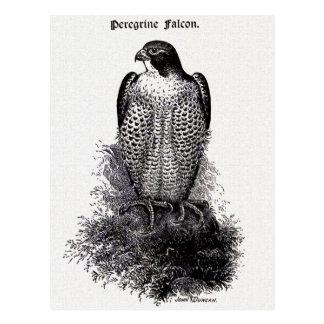 Peregrine Illustratie van de Vogel van de Valk de Briefkaart