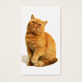 Perzische kat visitekaartjes