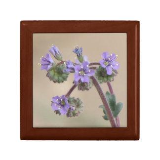 Phacelia Paarse Wildflowers Decoratiedoosje