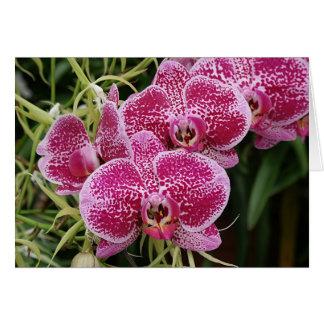 Phalaenopsis Briefkaarten 0