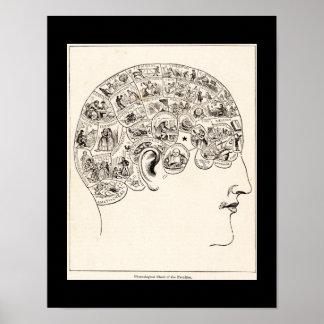Phrenological grafiek van de faculteiten, vintage poster