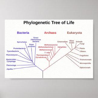 Phylogenetic Boom Poster