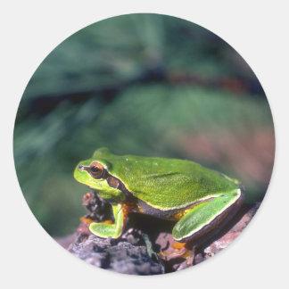 Pijnboom Barrens Treefrog Ronde Sticker