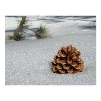 Pinecone op het Briefkaart van de Sneeuw
