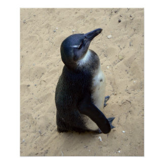 Pinguïn op zand poster