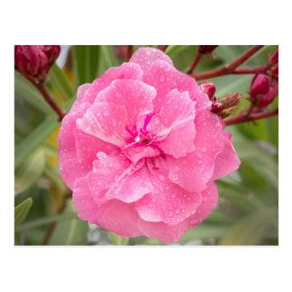 Pinks Briefkaart