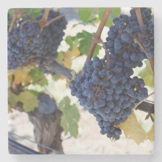 Pinot Noir druiven Stenen Onderzetter