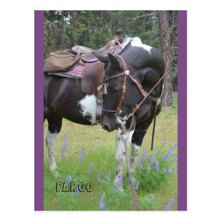 Pinto het paardbriefkaart van merrieFargo Briefkaart